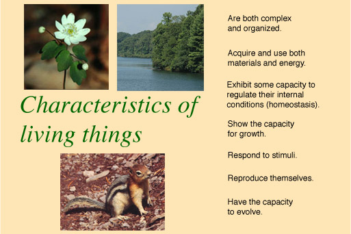 Living Things Obtain And Use Materials And Energy