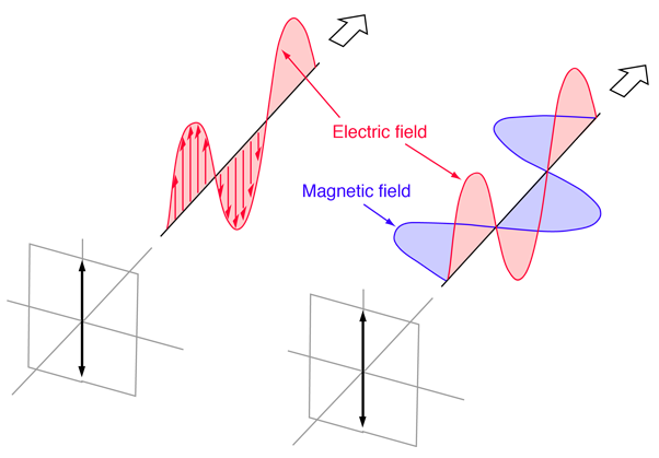 cbb88559b75c A plane electromagnetic wave is said to be linearly polarized. The  transverse electric field wave is accompanied by a magnetic field wave as  illustrated.