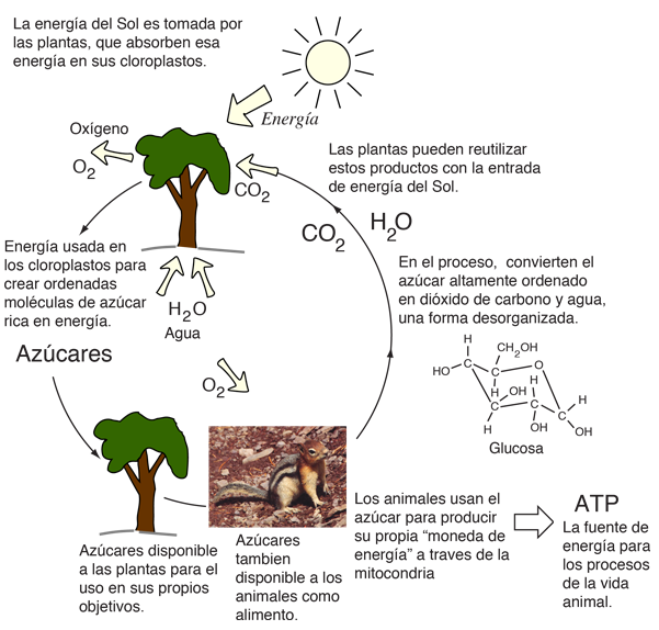 animal and environmental biology We offer an excellent research environment, particularly in topics such as animal  migration, molecular ecology, life history trade-offs, disease resistance in.